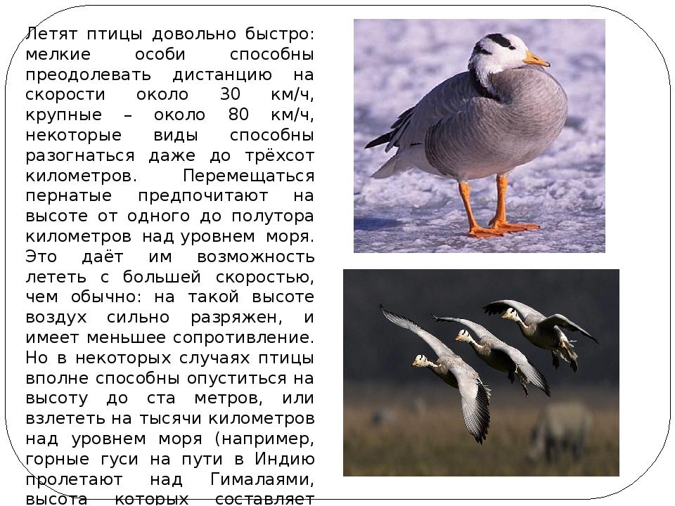 Летят птицы довольно быстро: мелкие особи способны преодолевать дистанцию на...