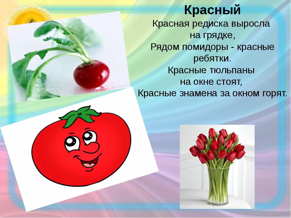 Красный Красная редиска выросла на грядке, Рядом помидоры - красные ребятки....