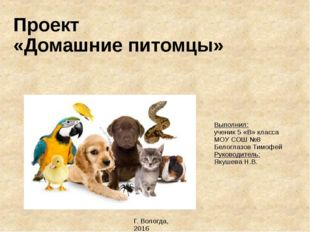 Проект «Домашние питомцы» Выполнил: ученик 5 «В» класса МОУ СОШ №8 Белоглазов