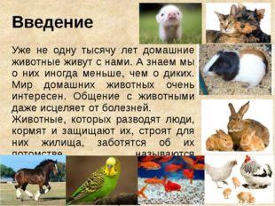 Введение Уже не одну тысячу лет домашние животные живут с нами. А знаем мы о