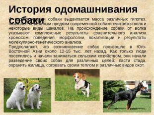 История одомашнивания собаки О происхождении собаки выдвигается масса различн