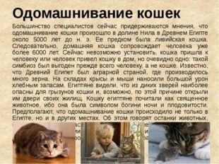 Одомашнивание кошек Большинство специалистов сейчас придерживаются мнения, чт