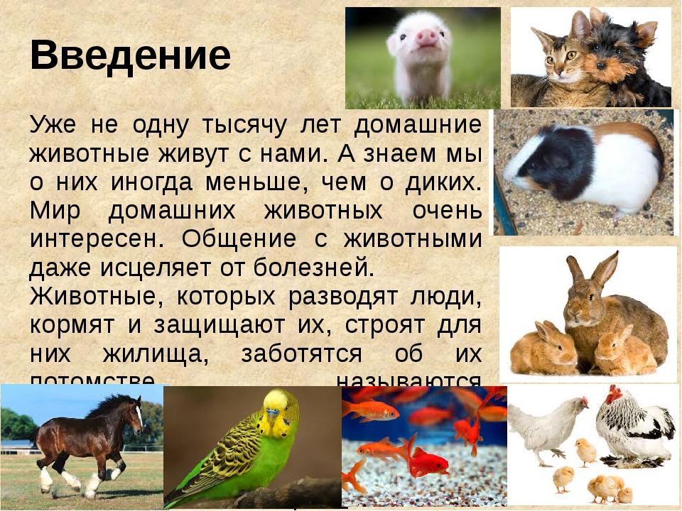 Введение Уже не одну тысячу лет домашние животные живут с нами. А знаем мы о...