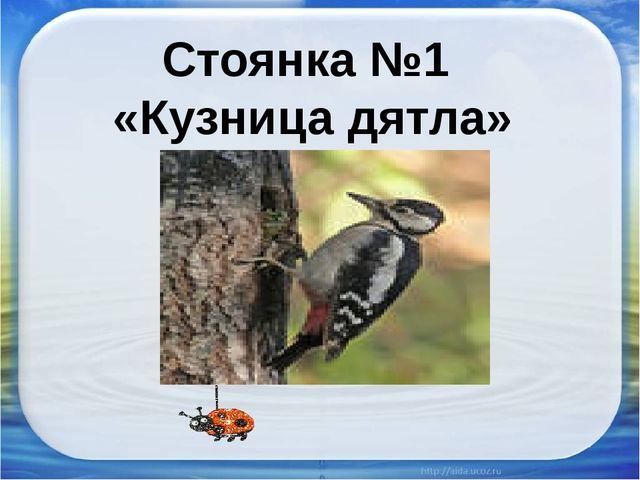 Стоянка №1 «Кузница дятла»