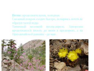 Сезоны года в Приморье Весна: продолжительная, холодная. Снежный покров сход
