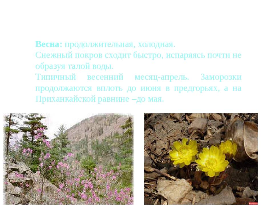 Сезоны года в Приморье Весна: продолжительная, холодная. Снежный покров сход...