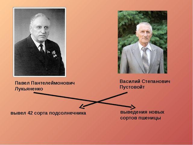 вывел 42 сорта подсолнечника Василий Степанович Пустовойт Павел Пантелеймоно...