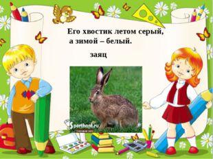 Его хвостик летом серый, а зимой – белый. заяц