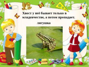 Хвост у неё бывает только в младенчестве, а потом пропадает. лягушка