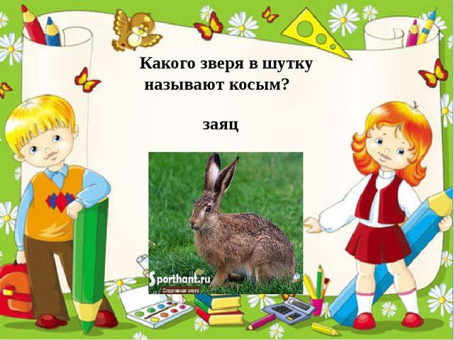Какого зверя в шутку называют косым? заяц