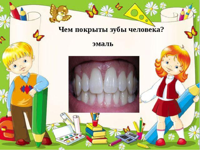 Чем покрыты зубы человека? эмаль