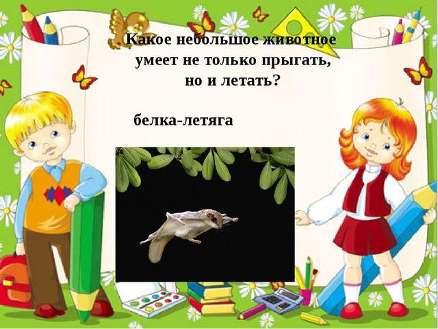 Какое небольшое животное умеет не только прыгать, но и летать? белка-летяга