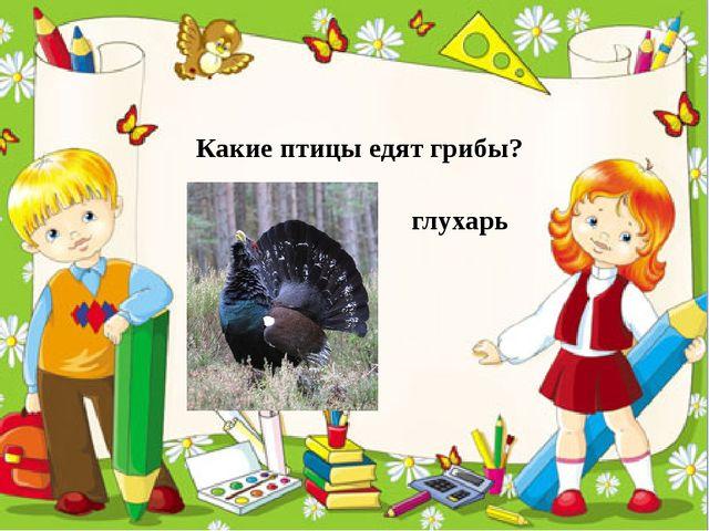 Какие птицы едят грибы? глухарь