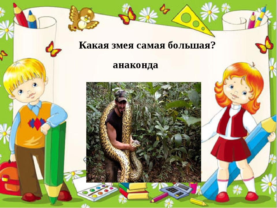 Какая змея самая большая? анаконда