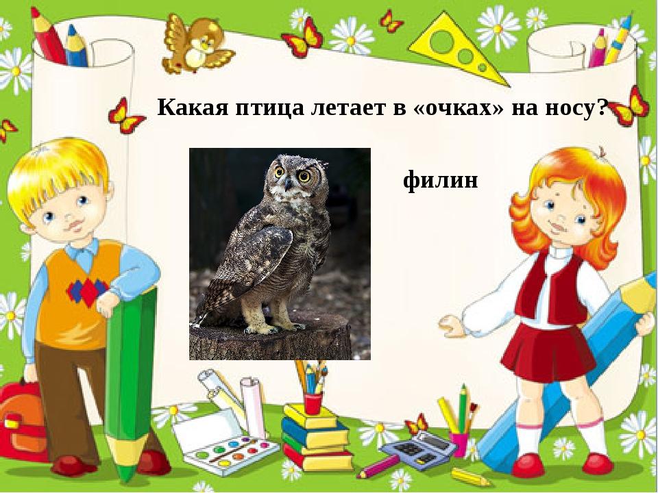 Какая птица летает в «очках» на носу? филин