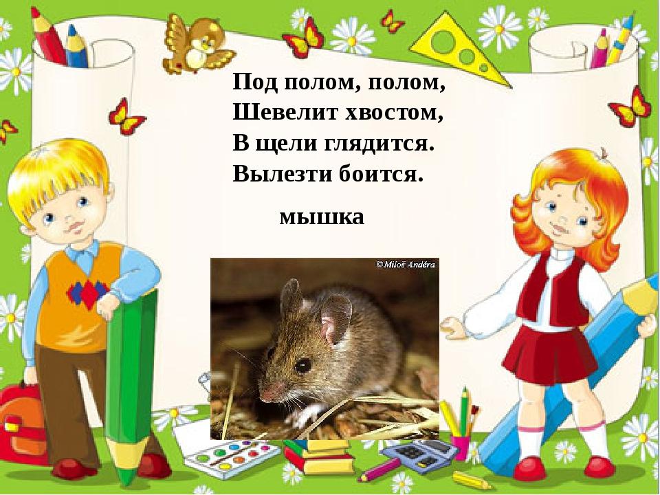 Под полом, полом, Шевелит хвостом, В щели глядится. Вылезти боится. мышка