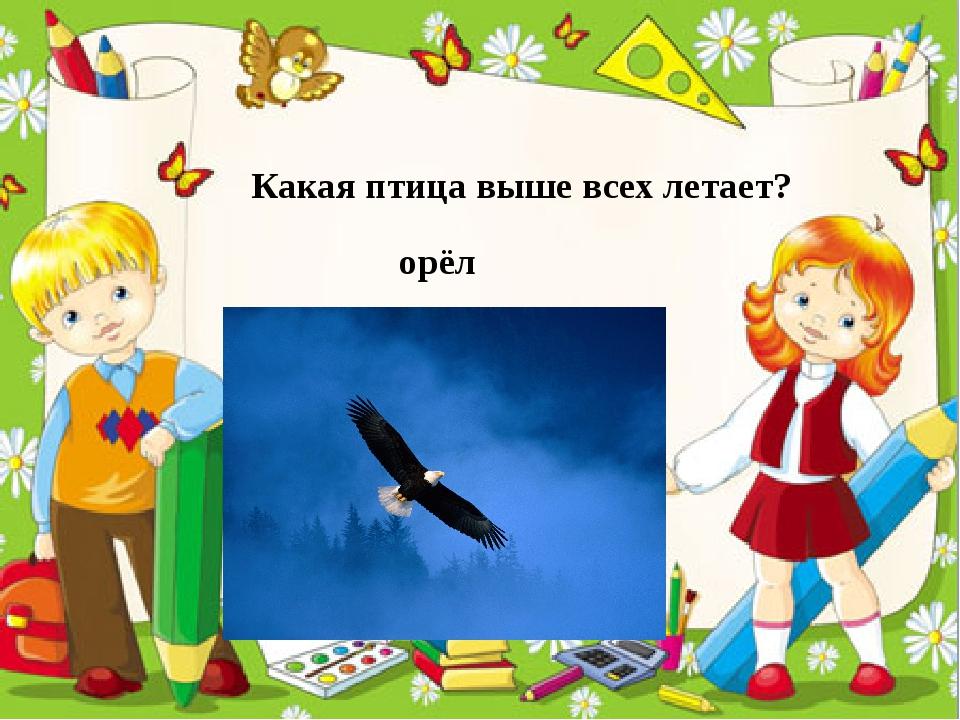 Какая птица выше всех летает? орёл