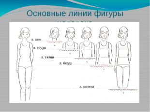 Основные линии фигуры человека л. шеи л. груди л. талии л. бёдер л. колена
