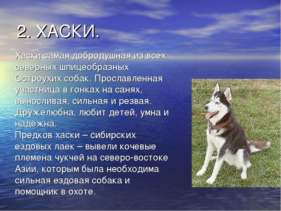 Характеристика собак и картинки хвала