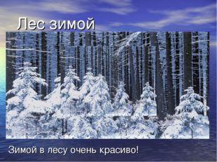 Лес зимой Зимой в лесу очень красиво!