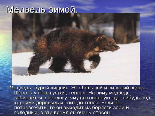 Медведь зимой. Медведь- бурый хищник. Это большой и сильный зверь. Шерсть у н...