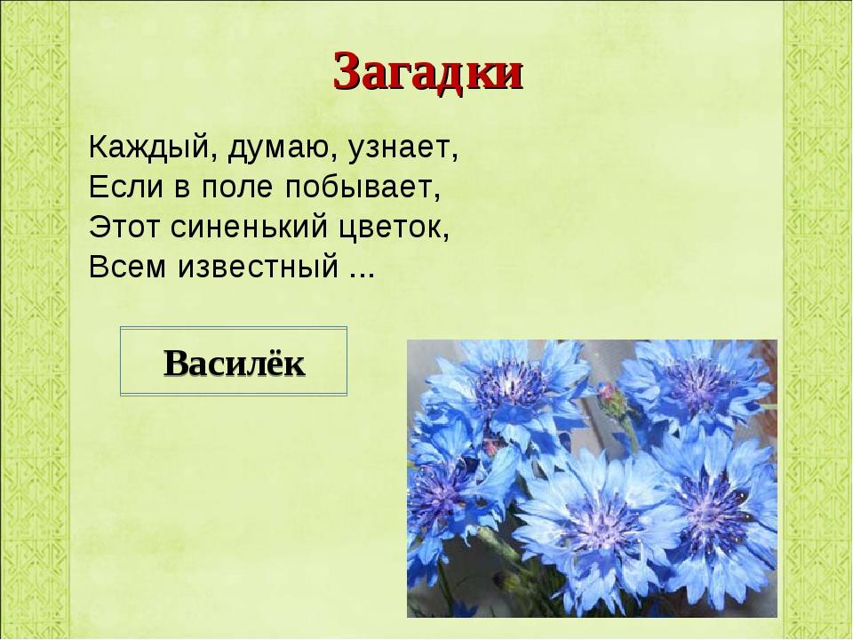 Загадки Каждый, думаю, узнает, Если в поле побывает, Этот синенький цветок, В...