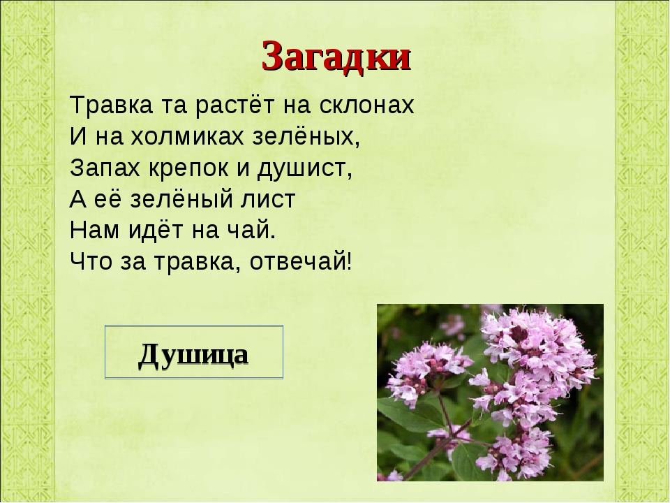 Загадки Травка та растёт на склонах И на холмиках зелёных, Запах крепок и душ...