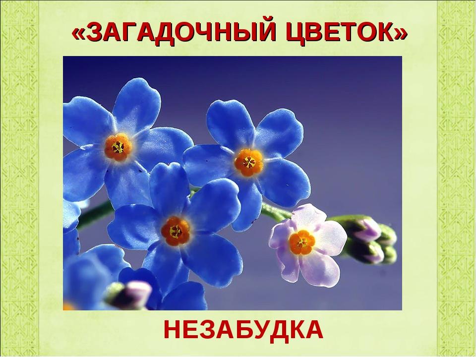 «ЗАГАДОЧНЫЙ ЦВЕТОК» НЕЗАБУДКА