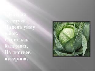 Зелёная толстуха Надела уйму юбок. Стоит как балерина, Из листьев пелерина.