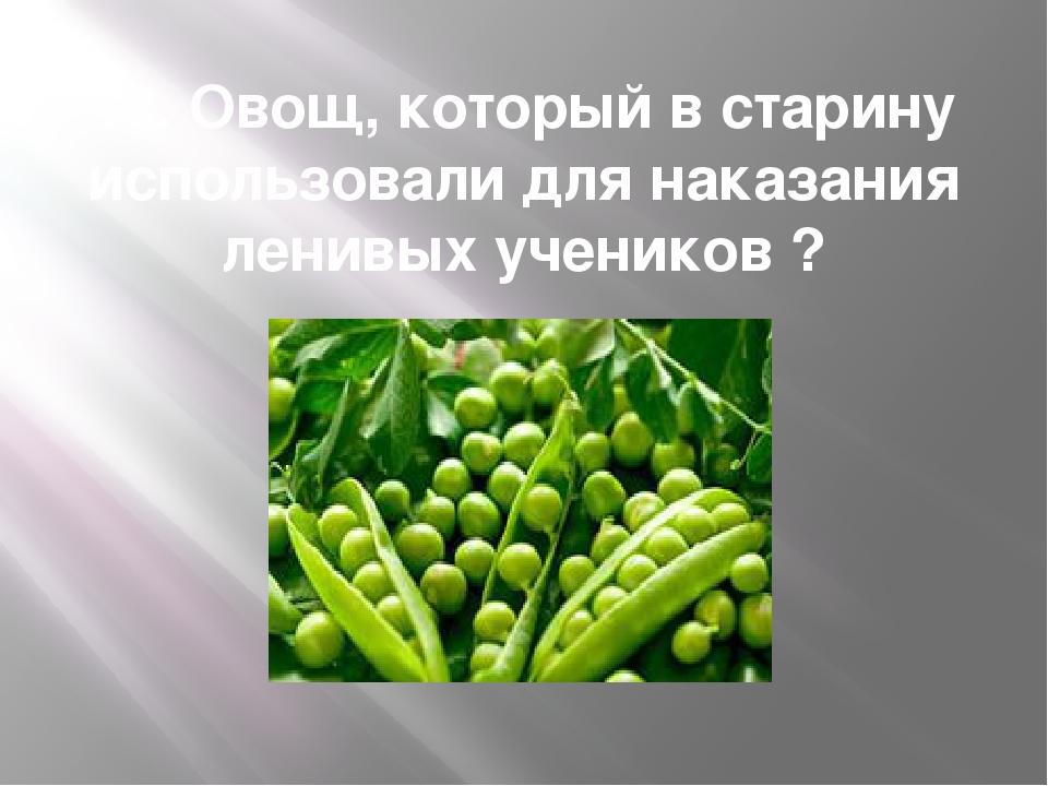 13. Овощ, который в старину использовали для наказания ленивых учеников ?