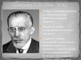 Северцев А.Н (1866- 1936) Собрал огромный материал по эмбриональному развитию