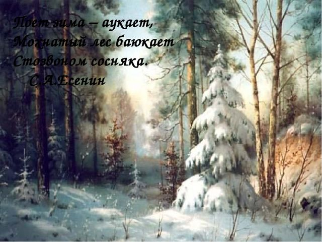 Поет зима – аукает, Мохнатый лес баюкает Стозвоном сосняка. С.А.Есенин