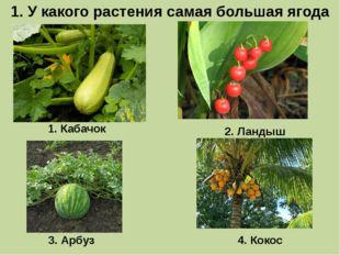 1. У какого растения самая большая ягода 1. Кабачок 3. Арбуз 2. Ландыш 4. Кокос