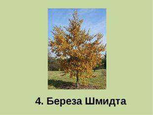 4. Береза Шмидта
