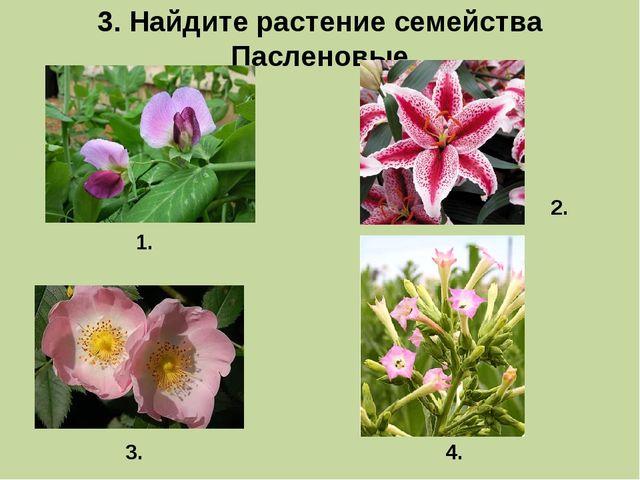 3. Найдите растение семейства Пасленовые 1. 3. 2. 4.