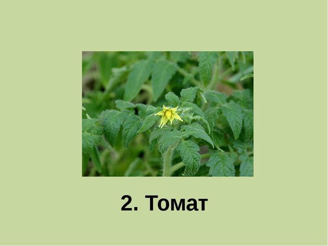 2. Томат