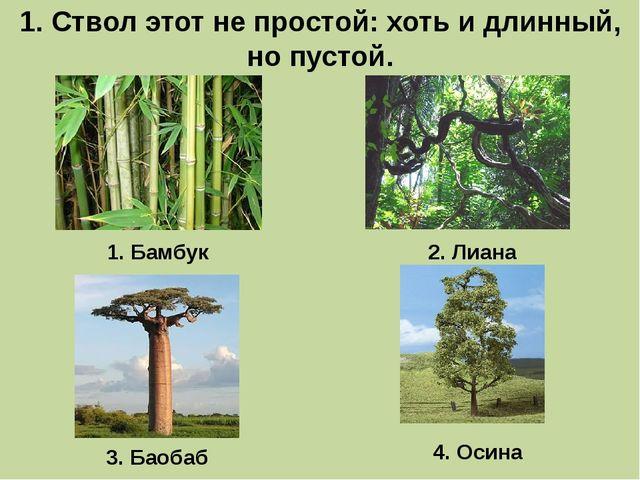 1. Ствол этот не простой: хоть и длинный, но пустой. 1. Бамбук 3. Баобаб 2. Л...