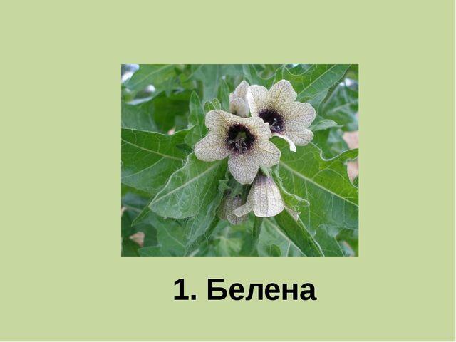 1. Белена