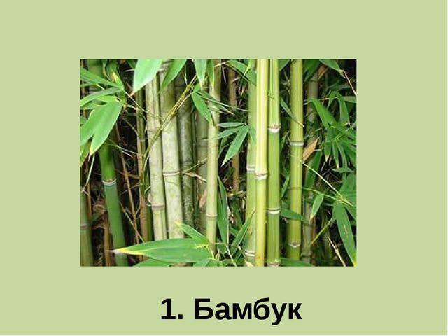 1. Бамбук