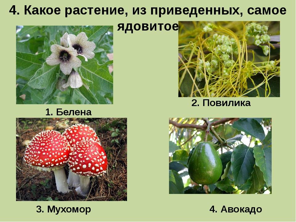 4. Какое растение, из приведенных, самое ядовитое 1. Белена 3. Мухомор 2. Пов...