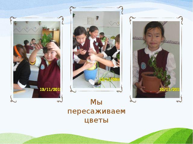 Мы пересаживаем цветы