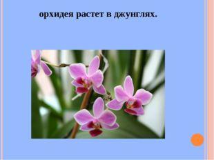 орхидея растет в джунглях.