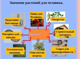 Значение растений для человека. Значение Пища для Человека. Лекарства Строите