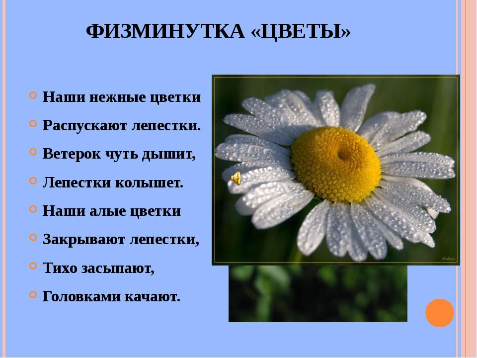 ФИЗМИНУТКА «ЦВЕТЫ» Наши нежные цветки Распускают лепестки. Ветерок чуть дышит...