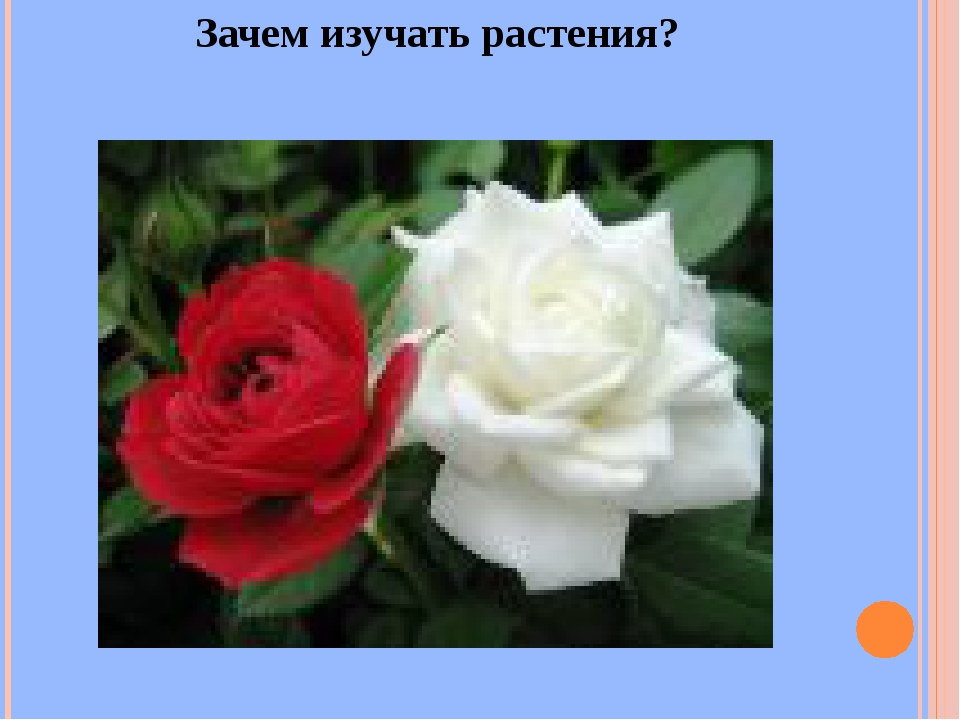 Зачем изучать растения?