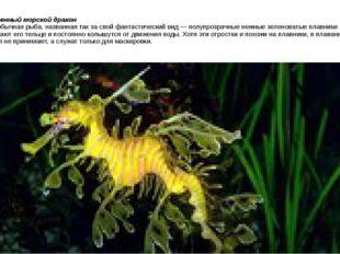 Лиственный морской дракон это необычная рыба, названная так за свой фантастич