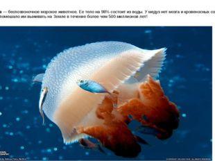 Медуза — беспозвоночное морское животное. Ее тело на 98% состоит из воды. У м