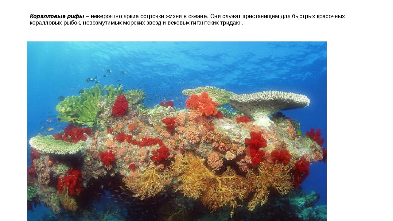 Коралловые рифы – невероятно яркие островки жизни в океане. Они служат приста...