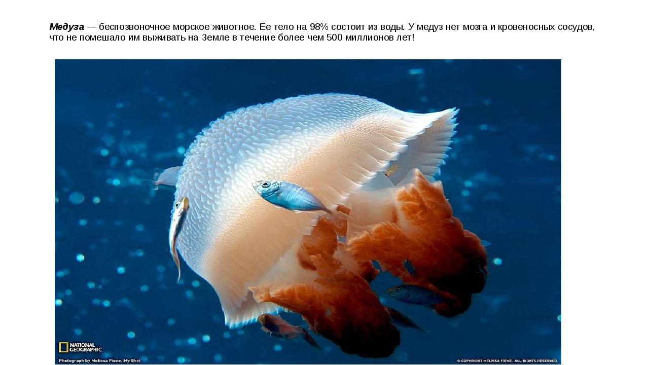 Медуза — беспозвоночное морское животное. Ее тело на 98% состоит из воды. У м...