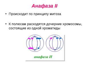 Анафаза II Происходит по принципу митоза К полюсам расходятся дочерние хромос